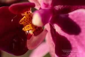 Orchidee mit Tropfen