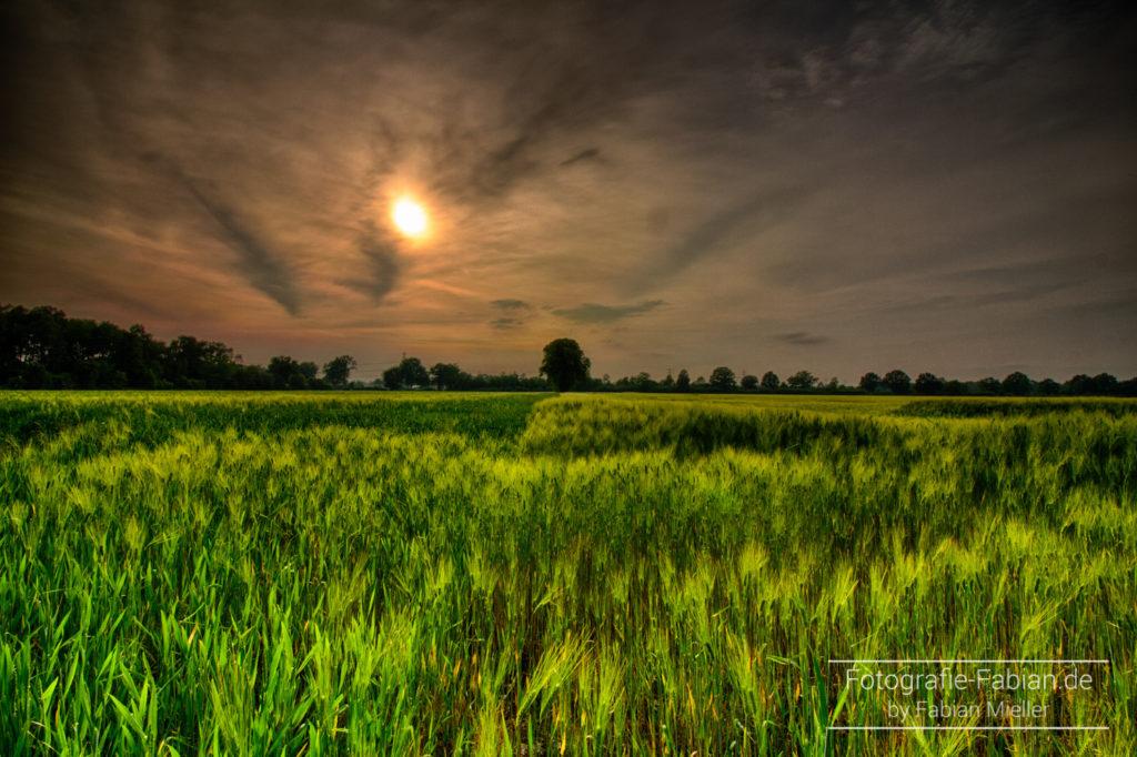 HDR vom Weizenfeld